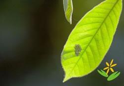 香港生态旅游专业培训中心- 生态旅游证书课程